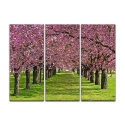 Bilderdepot24 Leinwandbild, Leinwandbild - Kirschblüten 90 cm x 60 cm