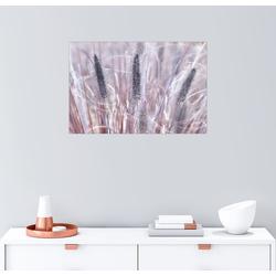 Posterlounge Wandbild, Lampenputzergras 91 cm x 61 cm