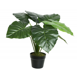 Kunstpflanze TARO(H 52 cm)