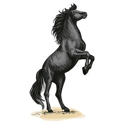 Wandtattoo Pferd in wilder Haltung - Pferdekopf Wandtattoos schwarz Gr. 88 x 160