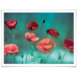 Wall-Art Poster Mohn Aquamarin, Pflanzen (1 Stück) 80 cm x 60 cm x 0,1 cm