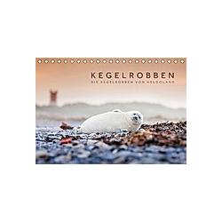 Kegelrobben - Die Kegelrobben von Helgoland (Tischkalender 2021 DIN A5 quer)