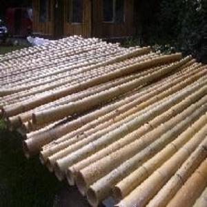 5 Stück Bambus - Stangen 200cm lang 8-10 cm Durchmesser