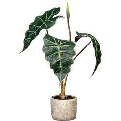 Künstliche Zimmerpflanze Alocasia Alocasia, Creativ green, Höhe 60 cm, im Zementtopf
