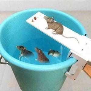 Mausfalle Catch RatteTrap Catch Walk Plank Humane Bucket Mäuse  zurücksetzen f