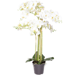 Kunstorchidee Orchidee Bora Orchidee, Botanic-Haus, Höhe 110 cm