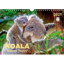 Koala - kleiner Teddy (Wandkalender 2021 DIN A4 quer)