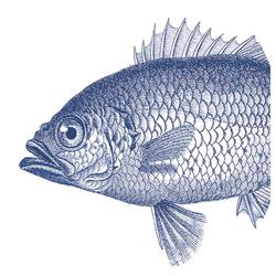 PPD Papierserviette Fish Marine 20 Stück 33 cm