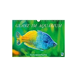Glanz im Aquarium: Süßwasserfische (Wandkalender 2021 DIN A4 quer) - Kalender