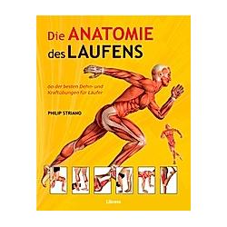 Die Anatomie des Laufens