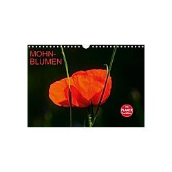 Mohnblumen (Wandkalender 2021 DIN A4 quer)