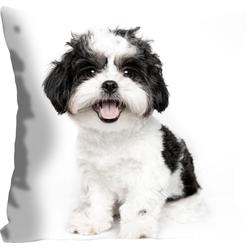 Kissenhülle Malteser, queence (1 Stück), mit einem Malteser Hund weiß