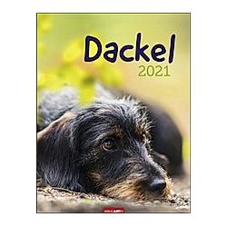 Dackel 2021