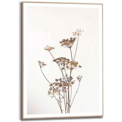 Reinders! Bild Gerahmtes Bild Bärenklau Natur - Pflanz - Getrocknet - Blumen, Pflanzen (1 Stück)