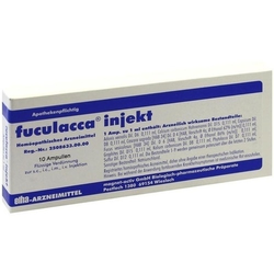FUCULACCA Ampullen 10 St