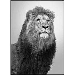 Poster WILDLIFE ANIMALS (BH 50x70 cm)