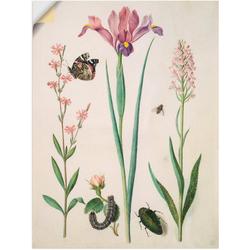 Artland Wandbild Admiral, Rose Iris Knabenkraut., Pflanzen (1 Stück) 30 cm x 40 cm