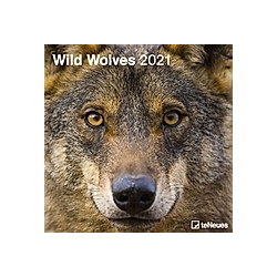 Wild Wolves 2021