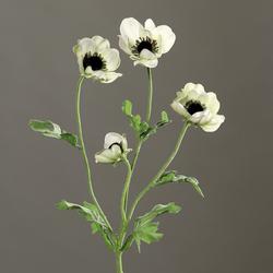 Anemone weiß/grün