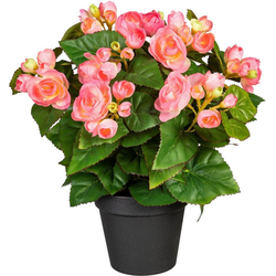 Künstliche Zimmerpflanze Eleonore Begonien, DELAVITA, Höhe 35 cm rosa