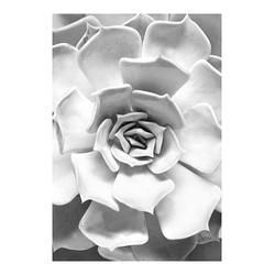 KOMAR XXL Poster Succulent Closeup bunt