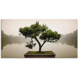 Artland Glasbild Chinesischer Bonsaibaum, Bäume, (1 St.) grün Glasbilder Bilder Bilderrahmen Wohnaccessoires