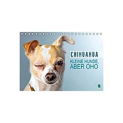 Chihuahua: Kleine Hunde, aber oho (Tischkalender 2021 DIN A5 quer)
