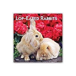 Lop-eared Rabbits - Kaninchen mit Hängeohren/Widderkaninchen 2021 - 16-Monatskalender