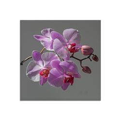Artland Glasbild Orchideentraum, Blumen (1 Stück) 50 cm x 50 cm x 1,1 cm