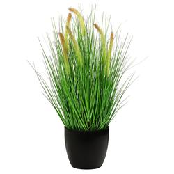 Kunstpflanze Borstenhirse mit schwarzem Topf, Höhe 68 cm, Dehner