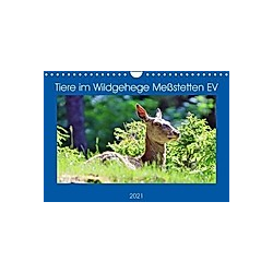 Tiere im Wildgehege Meßstetten EV (Wandkalender 2021 DIN A4 quer) - Kalender