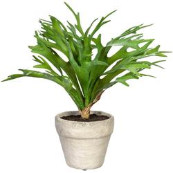 Künstliche Zimmerpflanze Geweihfarn Geweihfarn, Creativ green, Höhe 28 cm, im Zementtopf