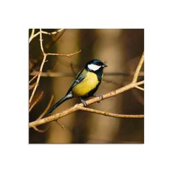 Artland Glasbild Kohlmeise im Wald, Vögel (1 Stück) 20 cm x 20 cm