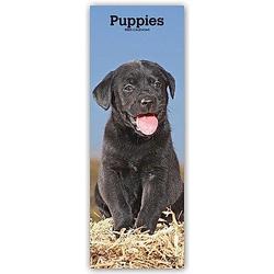 Puppies - Welpen - Hundewelpen 2021