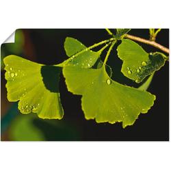 Artland Wandbild Ginkgo Blätter, Blätter (1 Stück) 90 cm x 60 cm