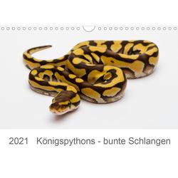 Königspythons - bunte Schlangen (Wandkalender 2021 DIN A4 quer)