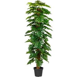 Künstliche Zimmerpflanze Monsterapflanze Grünpflanze, Creativ green, Höhe 190 cm