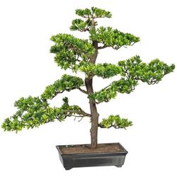 Kunstbonsai Bonsai Podocarpus Bonsai, Creativ green, Höhe 63 cm