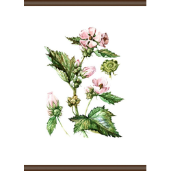 queence Leinwandbild Pflanzen Anatomie, 50x70 cm