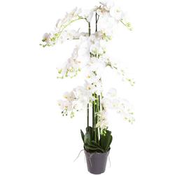 Kunstorchidee Orchidee Bora Orchidee, Botanic-Haus, Höhe 140 cm