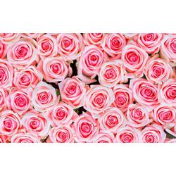 living walls Fototapete rosa Rosen, glatt, (1 St), 400 x 250 cm