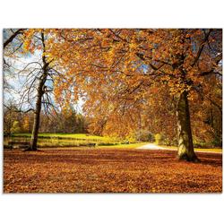 Artland Glasbild Herbst bei Schlosses Nymphenburg, Wiesen & Bäume (1 Stück) 80 cm x 60 cm