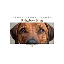 Ridgeback King (Tischkalender 2021 DIN A5 quer)