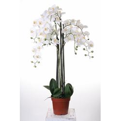 Kunstorchidee Orchidee XXL, Höhe 109 cm weiß