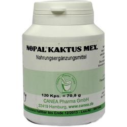 Nopal-Kaktus mex.