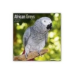 African Greys - Graupapageien 2021