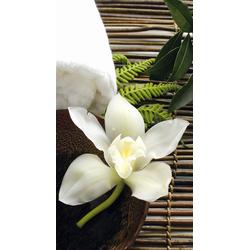Vliestapete Wellness Orchidee bunt Fototapeten Tapeten Bauen Renovieren