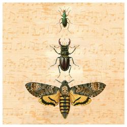 IHR Papierserviette Insekten, (5 St), 33 cm x 33 cm