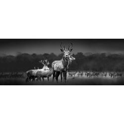 Glasbild HERD OF DEER (BHT 80x30x1 cm) Pro-Art