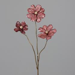Cosmea rosé